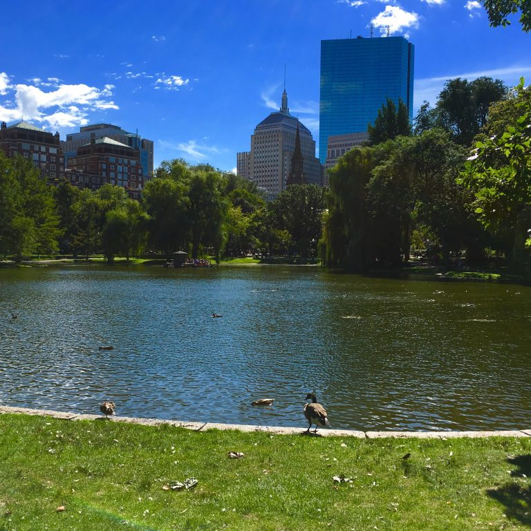 boston commons 768x768 - Five things you must do in Boston